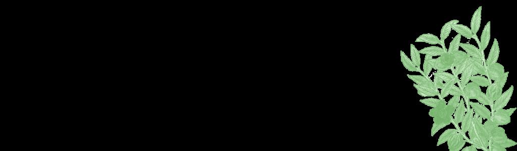 Illustration of nutmeg plant